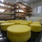 Governo de Sergipe isenta ICMS de queijo coalho e outros derivados