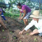 Sergipe investe na produção agroecológica